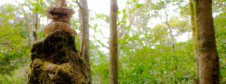 エメラルドグリーンの渓谷と奇岩の絶景:乳岩峡(愛知県新城市の観光、撮影スポット)