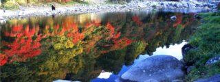 東海随一の紅葉スポット:香嵐渓、その壱(愛知県豊田市の観光、撮影スポット)