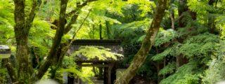 東海随一の紅葉スポット:香嵐渓、その弐(愛知県豊田市の観光、撮影スポット)