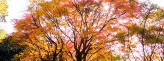 紅葉が美しい松平郷(松平東照宮、松平城址、高月院):愛知県豊田市も観光、撮影スポット