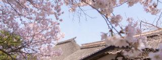 桜の絶景!長野県高遠城址公園(信州伊那の観光、撮影スポット)