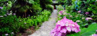 三河のあじさい寺:本光寺(愛知県幸田町の観光、撮影スポット)