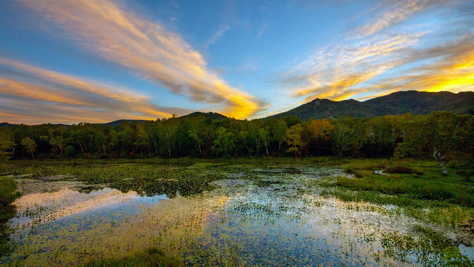 朝焼けに彩られた美しい蓮池 - -長野県山ノ内町- -