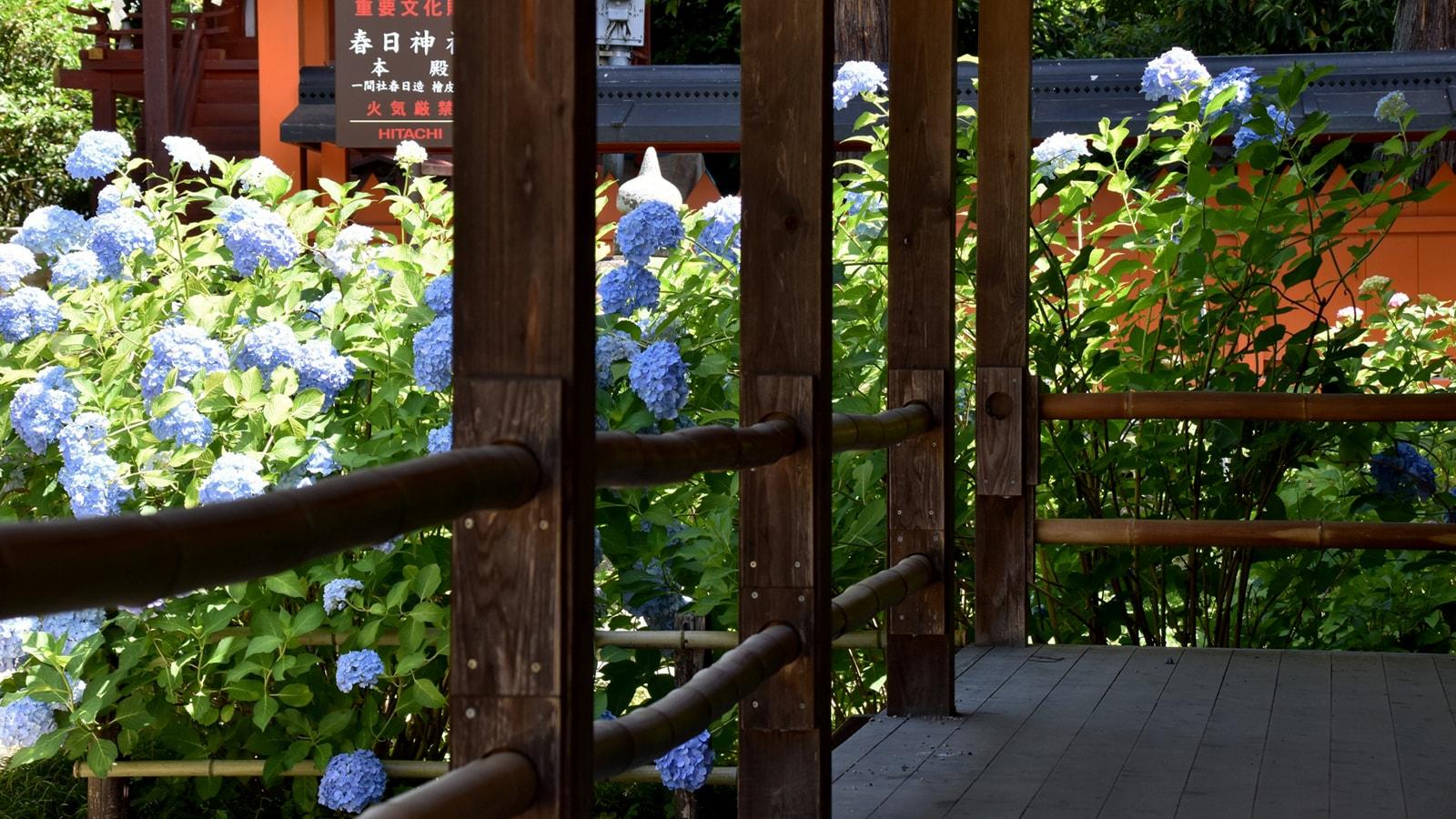 あじさい寺として名高い矢田寺の境内には春日神社もある - -奈良県大和郡山市にある観光、撮影スポット- -