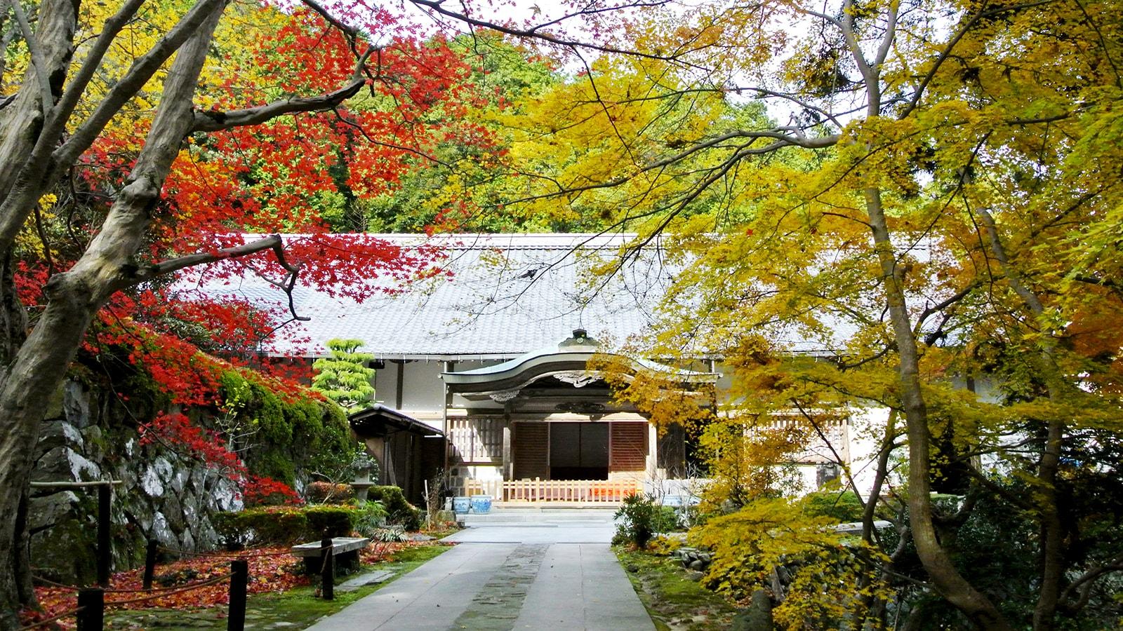 瓦屋禅寺の庫裏も鮮やかな紅葉に彩られる - -滋賀県東近江市にある観光、撮影スポット- -