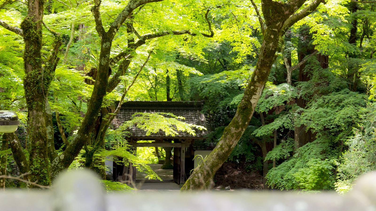新緑の緑に輝く香積寺山門 - -愛知県豊田市にある観光、撮影スポット- -